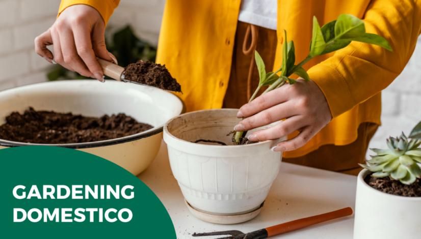 World Service Ambiente e Pulizia - gardening domestico